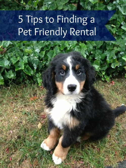5 Tips to a Pet Friendly Rental